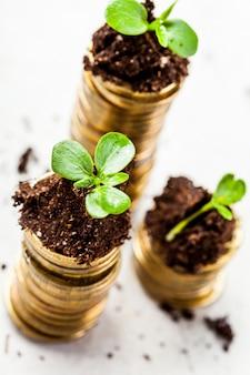 젊은 식물을 가진 토양에서 황금 동전입니다. 돈 성장.