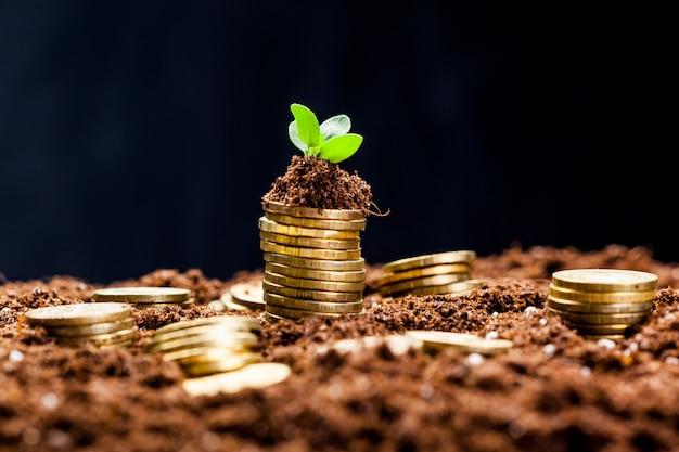 젊은 식물을 가진 토양에서 황금 동전입니다.