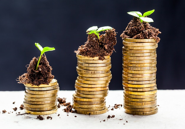 Golden coins in soil with young plant, money growth concept,