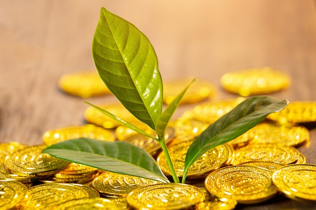 Golden coins with young plant. money growth increase concept.