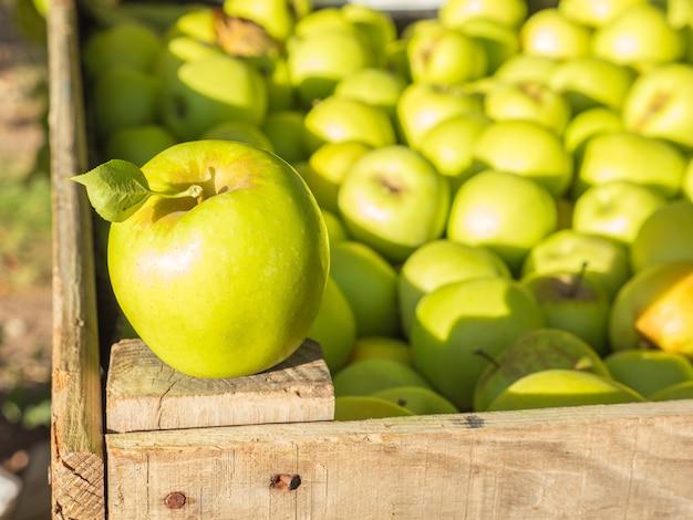 リンゴの木のフィールドで木製のパロットにゴールデンデリシャスリンゴ
