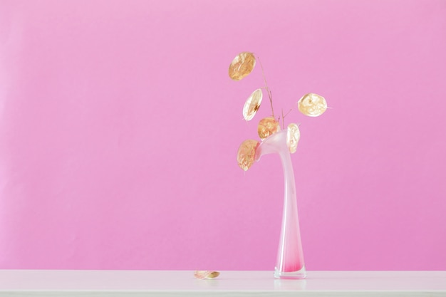 Golden dried moonflowers in vase on pink background