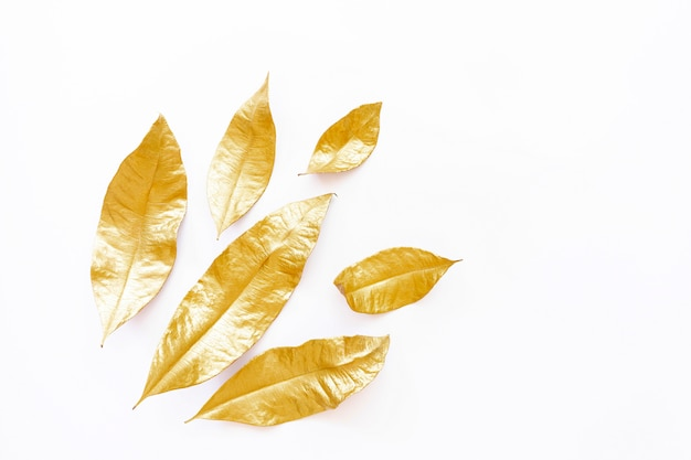 Golden dry leaves isolated on white background