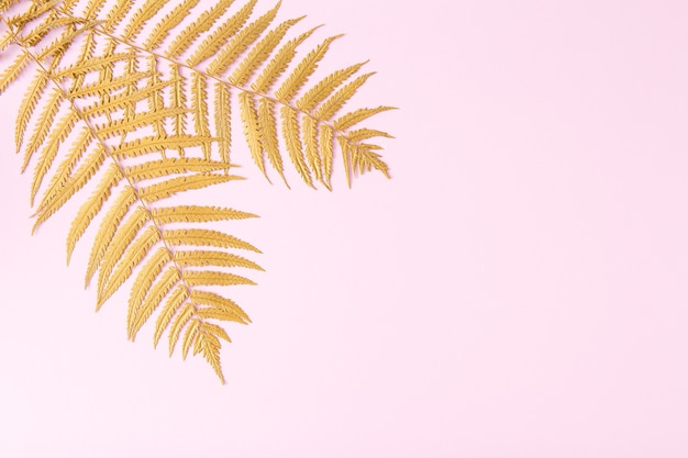 Golden fern branches on pastel pink background. minimalistic natural composition. flat lay. copy space.