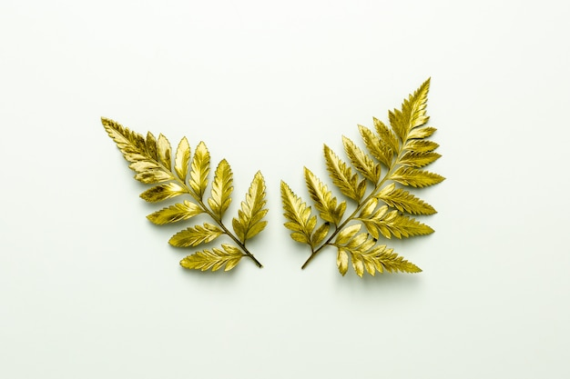 Golden fern leaves isolated on white background.