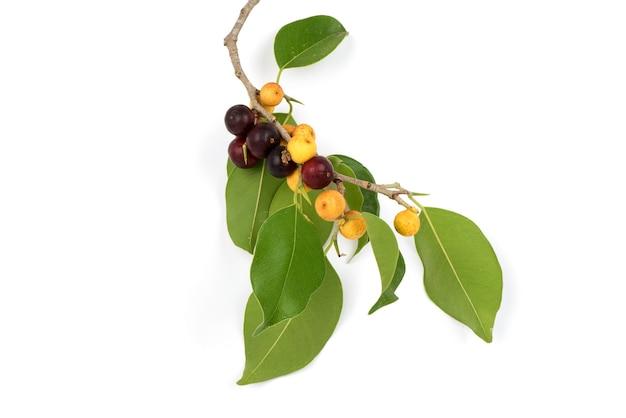 Золотые плоды инжира и зеленые листья, изолированные на белой поверхности.