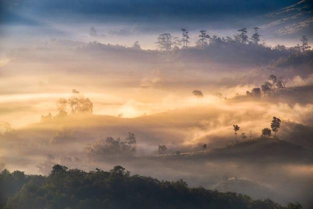 Golden foggy sunshine on hill in valley