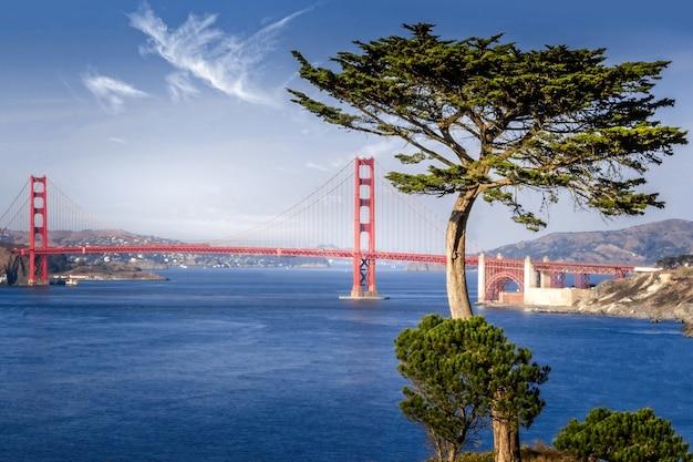 Golden gate bridge framed by a cypress tree