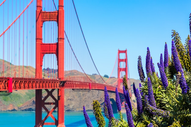 Golden gate bridge san francisco purple flowers california
