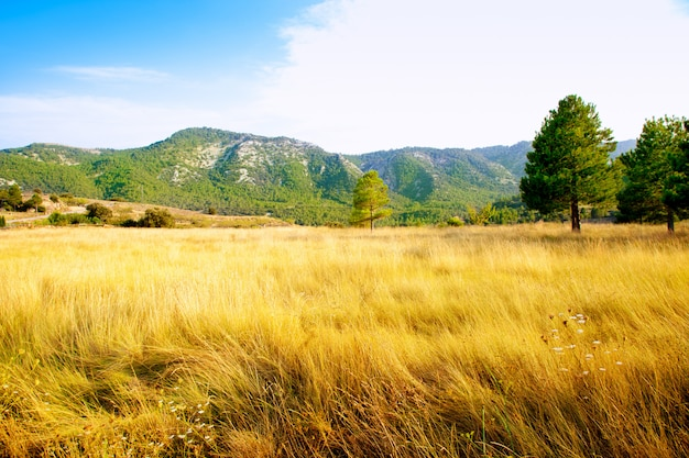 Golden grass field with pine tree mountains