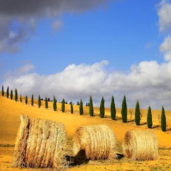 トスカーナの黄金の丘。