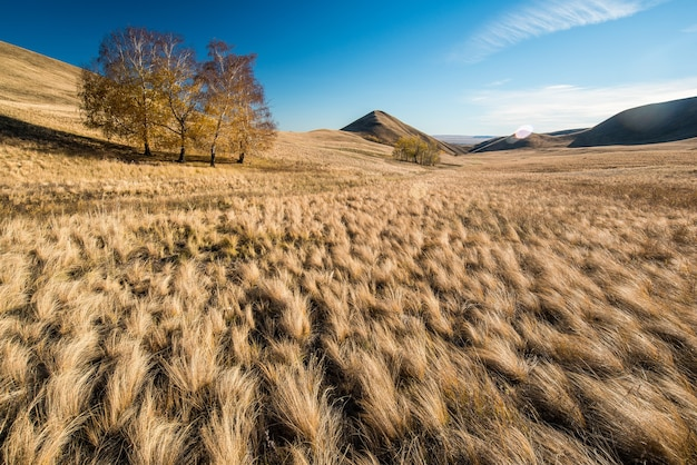 Золотые холмы, небольшие горы с деревьями осенью на фоне голубого неба