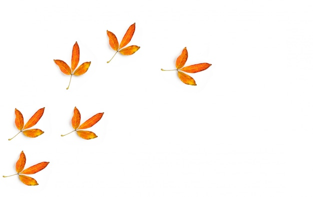 The golden leaves as the trace of a bird on a white background and copy space