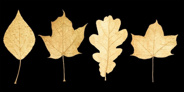 Golden leaves isolated on black background