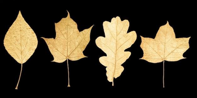 黒の背景に分離された黄金の葉