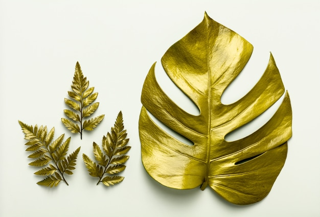Golden leaves isolated on white background.