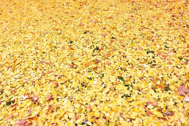 秋の季節の黄金の葉パターン