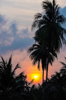 The golden light of the sun and clouds in the sky behind the coconut trees.
