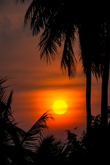 The golden light of the sun and clouds in the sky with the shadow of the coconut trees.