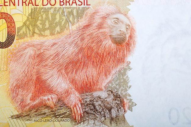 ゴールデンライオンタマリンブラジルのお金からの肖像画