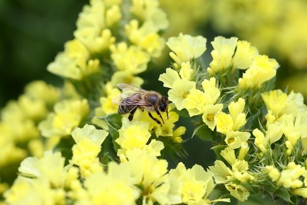 황금 무성한 꽃과 벌은 꿀 개념을 수집합니다