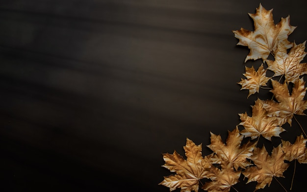 Golden maple leaves on a black background