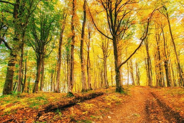 秋の緑の草に黄金の朝の太陽光線。
