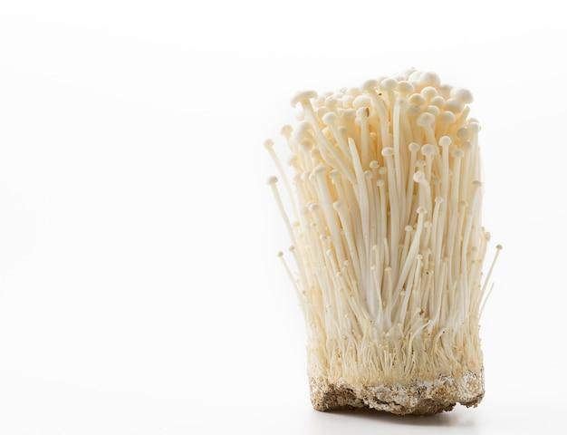 Золотой игольчатый гриб