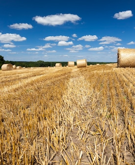 小麦収穫後のゴールデンオレンジストロー、