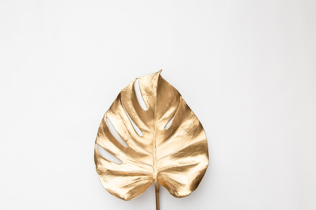 Golden painted tropical monstera leave on plain white background isolated
