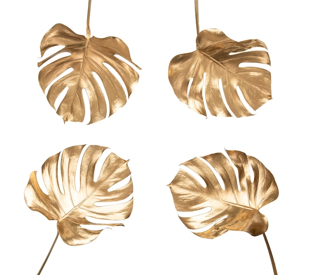 Golden painted tropical monstera leaves on plain white background isolated