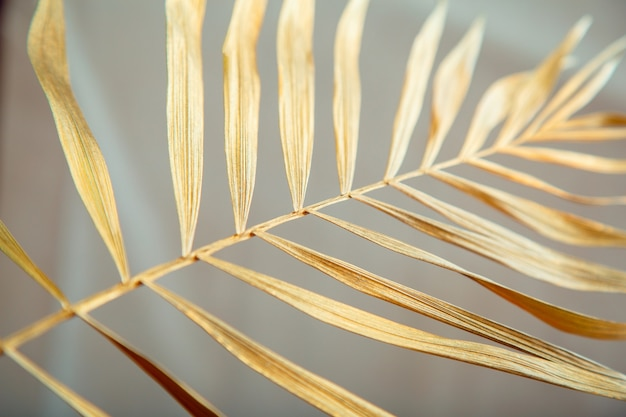 Golden palm tree leaf texture. shiny golden tropical palm leaves on white background.