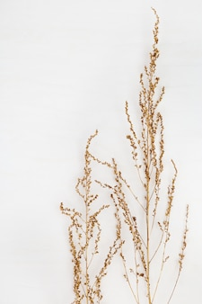 Golden plat on a white background