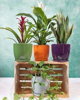 Golden pothos, epipremnum aureum, bromeliad, peace lily, sansevieria, snake plant