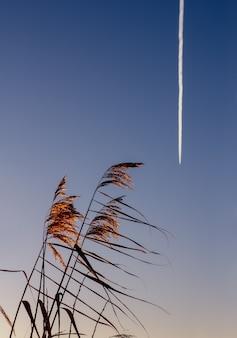 호수에 황금 갈대가 날아가는 비행기에 손을 흔들고 있습니다. 자유, 가벼움, 비행의 개념. 세로 사진입니다.