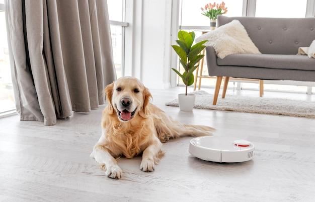 自宅の床に横たわっているゴールデンレトリバーの犬と彼の近くにロボット掃除機