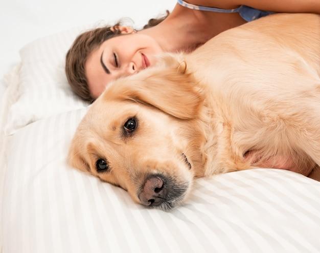ベッドで寝ているゴールデンレトリバー犬。