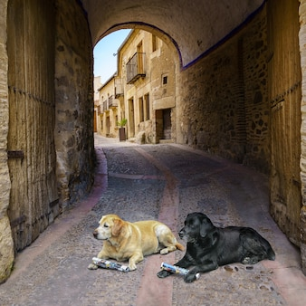 Golden retriever dogs waiting for orders from their owner in an old town street with stone houses and access tunnel to the city.