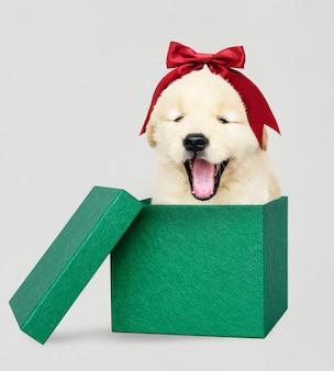 Golden retriever puppy in a green christmas gift box