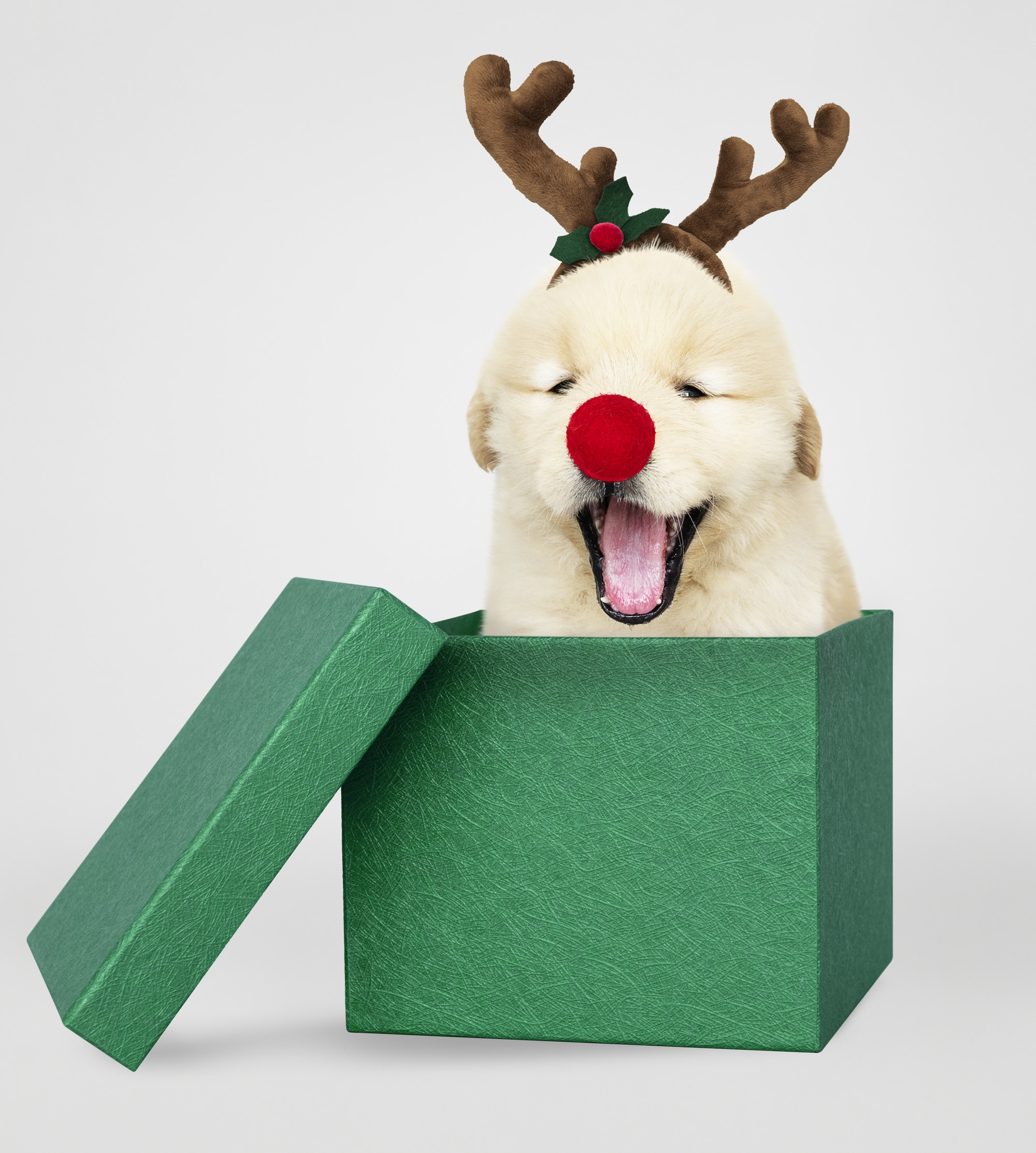 Golden Retriever puppy in a green Christmas gift box
