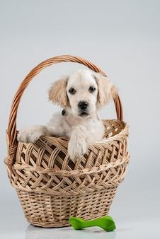 バスケットとおもちゃのゴールデンレトリバーの子犬