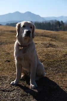 산에서 골든 리트리버 강아지