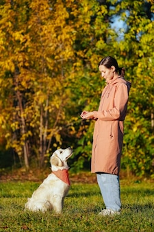 Golden retriever puppy with bandana in park looking up at girl in pink raincoat