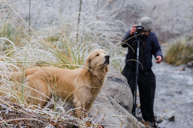 Golden retriever with a young male photographer taking photograph