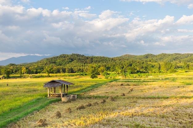 小さな小屋のあるゴールデンライスフィールドは、大きな山と青い空を背景にしています。 Premium写真