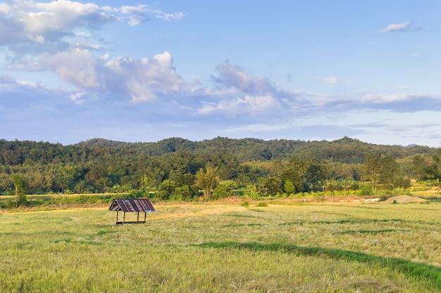 小さな小屋のあるゴールデンライスフィールドは、大きな山と青い空を背景にしています。