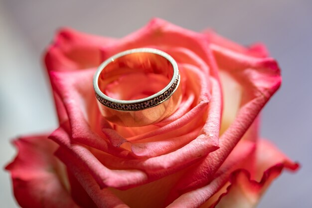 Golden ring in pink rose background