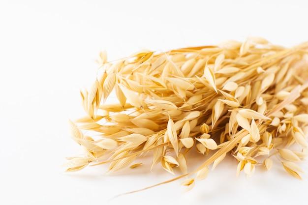 から分離された白のオーツ麦の黄金の熟した植物の穂。