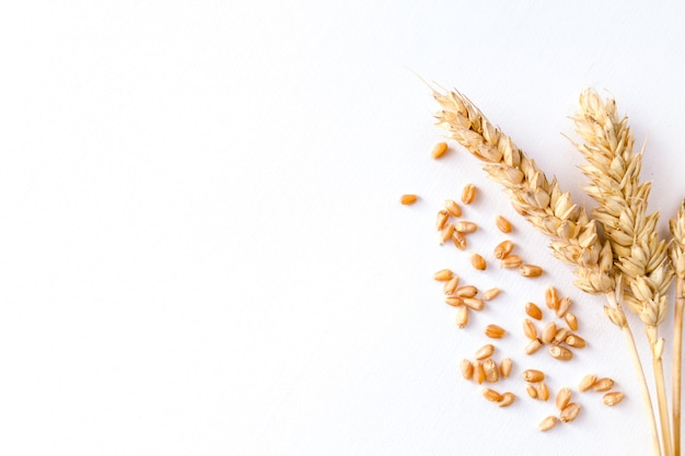 Golden ripe wheat on white background Premium Photo