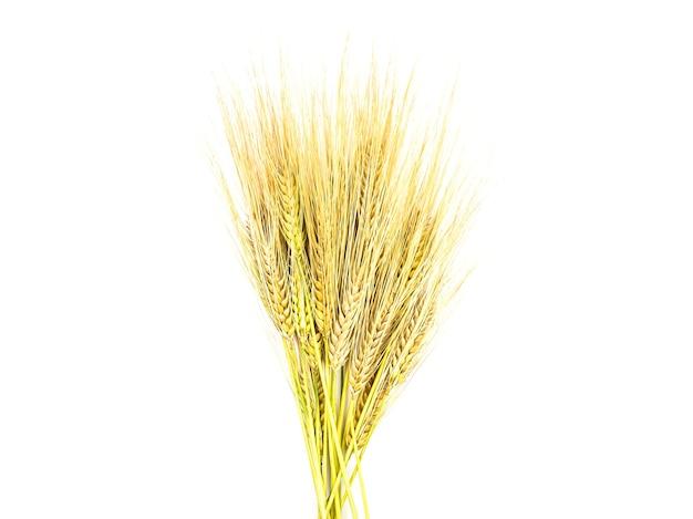 Золотые колоски ржи на белом фоне изолировать